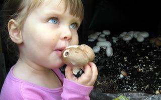 Почему детям нельзя грибы, можно ли детям грибы в принципе