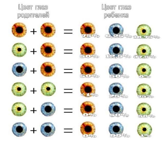 С каким цветом глаз рождаются кареглазые дети