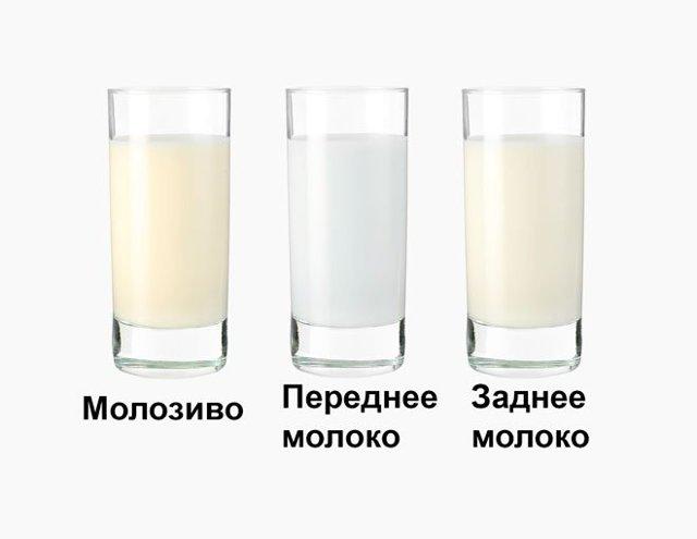 Какого цвета должно быть грудное молоко у кормящей женщины