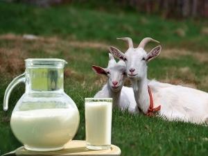 Нужно или нет кипятить козье молоко для ребенка