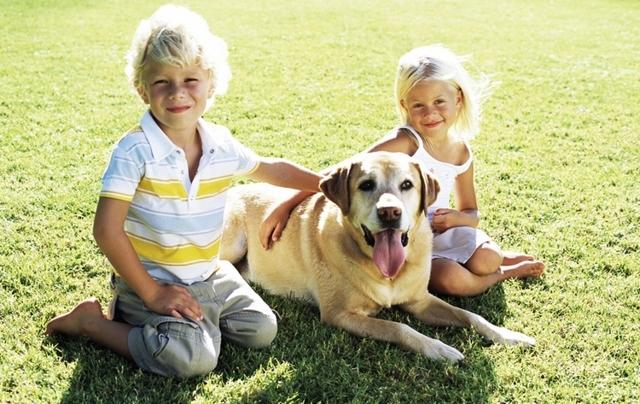 Какую собаку выбрать для ребенка -ТОП 7 собак для детей и квартиры