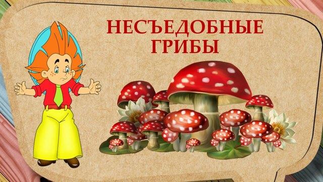 Картинки грибов для детей:съедобные и несъедобные грибы с названиями