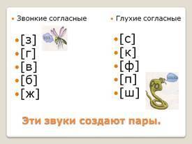 Согласные звуки в русском языке: пары по звонкости-глухости, по мягкости-твёрдости