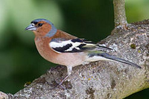 Птицы для детей: картинки с названиями (домашние, перелетные и др.)