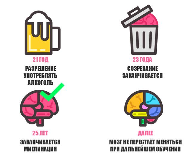 Как развивается мозг ребенка